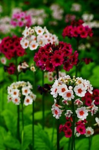 Spring Flowers – Time to Get Your Garden On!!