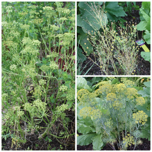 garden cleanup flowering herbs